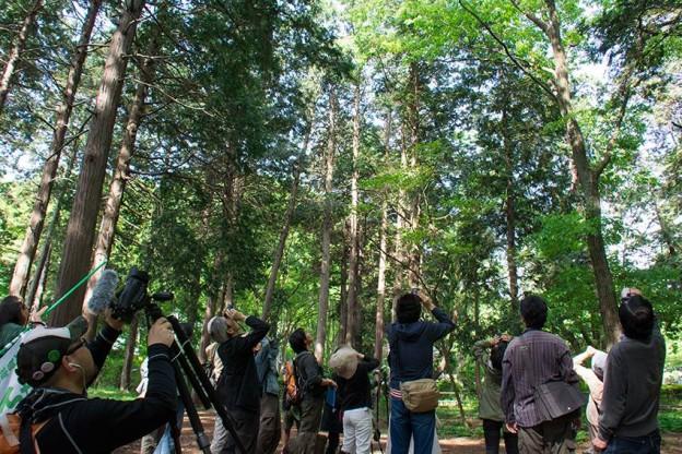2014年5月3日(土)「どんぐり林の夏鳥調査と観察会」(主催:どんぐりの会)調査定点5ヵ所の内、4ヵ所で夏鳥(キビタキ)を確認。サンコウチョウも調査日の翌日に観察。